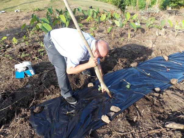 Blog Sweet Potato Planting